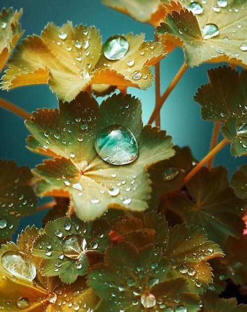 gota-de-agua-colores